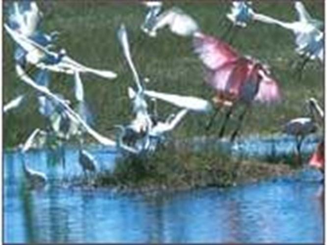 Kuş cennetleri tehlikede